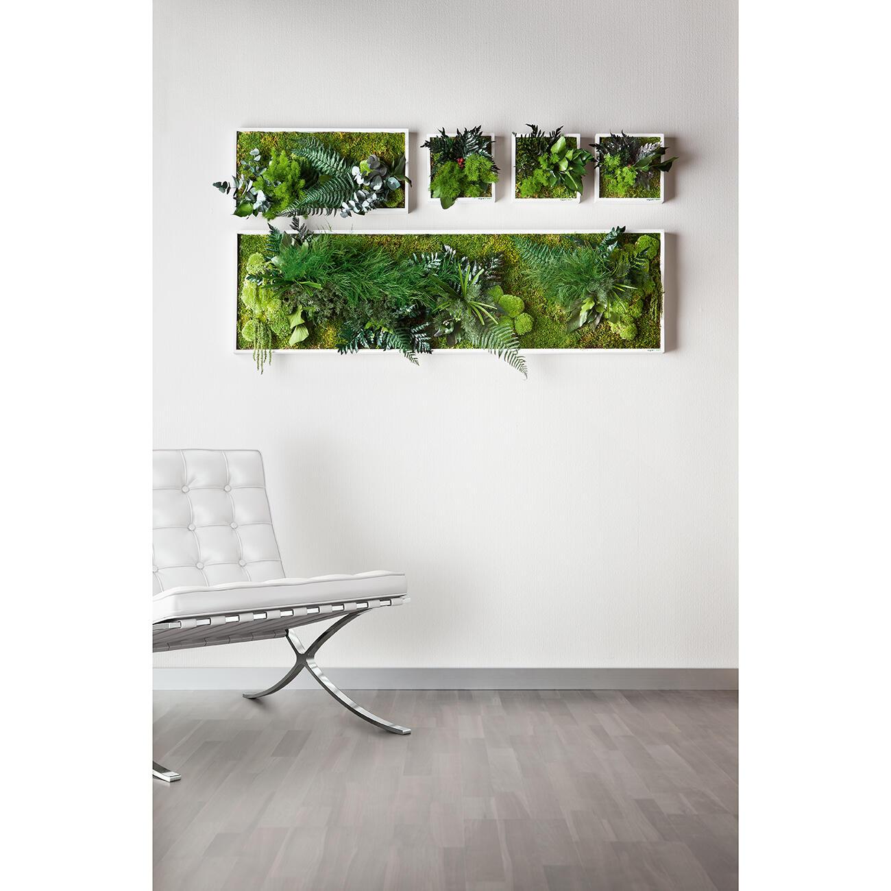 Perfekt Echtpflanzenbilder | 3 Jahre Garantie | Pro Idee