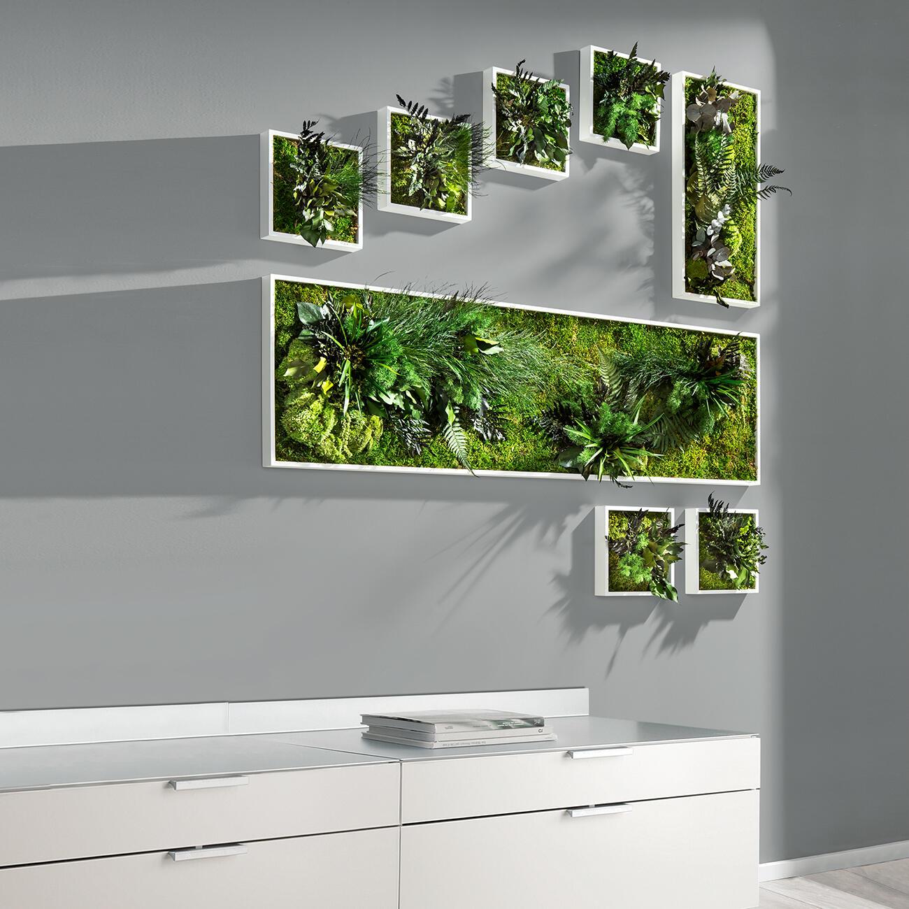 echtpflanzenbilder 3 jahre garantie