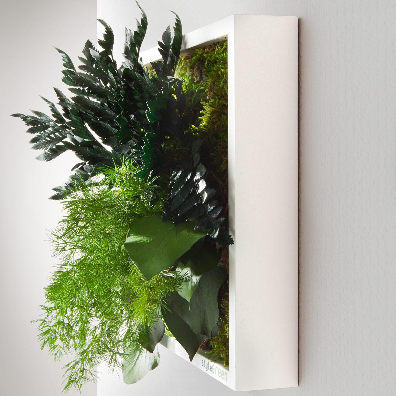 echtpflanzenbilder 3 jahre garantie pro idee. Black Bedroom Furniture Sets. Home Design Ideas