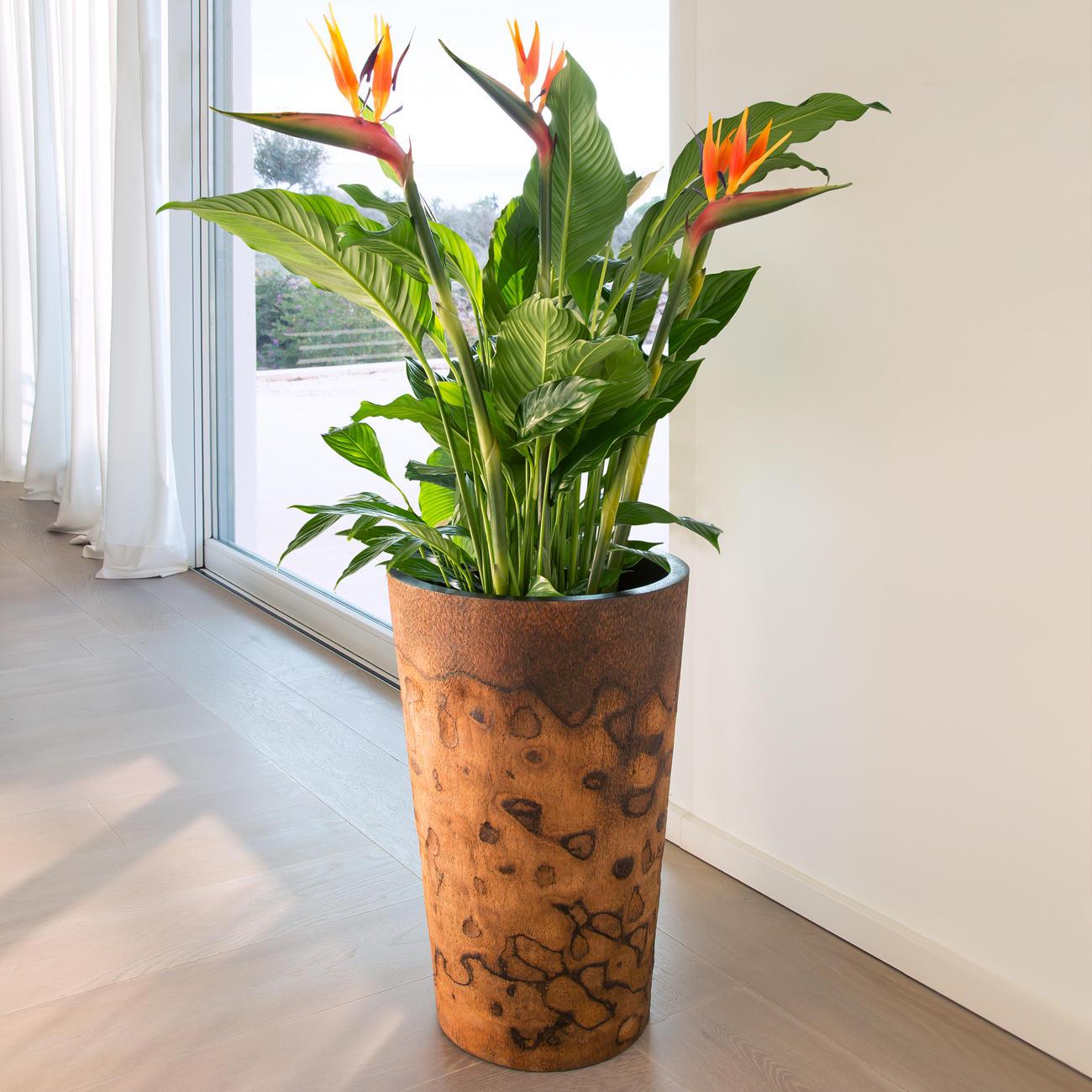 palmholz pflanztopf 3 jahre garantie pro idee. Black Bedroom Furniture Sets. Home Design Ideas
