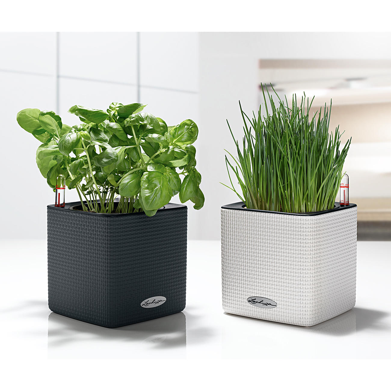 Gemeinsame Lechuza Selbstbewässernder Pflanztopf Cube Color Deluxe Set @NV_72