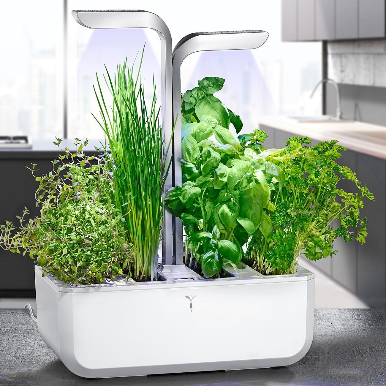 Veritable Kräutergarten Smart, weiß online kaufen