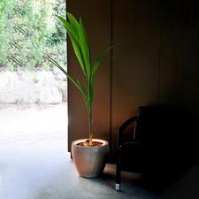 Beleuchtungsring für Pflanzen