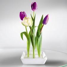 Keramik-Steckvase, 2er-Set - Trendig, Platz sparend. Ungewöhnlicher Blickfang – mit nur wenigen Blumen.