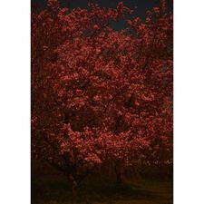 Adam Goodison – Passage V - Adam Goodison: Fotografien wie Gemälde – Meisterhand ohne Pinsel. Erste Edition des Künstlers. 40 Exemplare. Maße: 70 x 100 cm