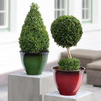 Leicht-Pflanzkübel So schön wie glasierte Keramik – aber ca. 66 % leichter, frostfest und bruchsicher.