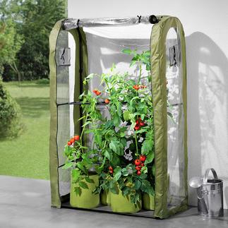 Tomaten-Gewächshaus-Set, 5-teilig Eine schützende Gewächshaushaube und einzigartige Luftschnitt-Pflanztaschen schaffen optimale Bedingungen für Ihre Topftomaten.