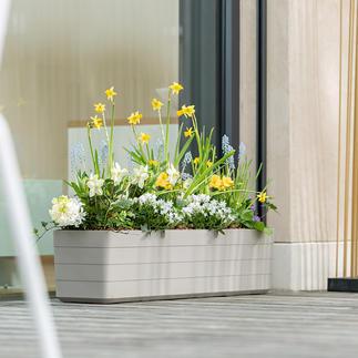 Design-Blumenkasten Der Blumenkasten in trendig zweifarbigem Design – viel jünger, schlanker und eleganter.