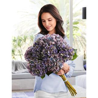 Hortensienstrauß Blüten von unvergänglicher Schönheit. Als elegantes Dutzend wie vom Floristen fertig gebunden.