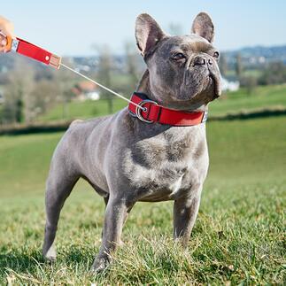 2-in-1 Hundehalsband mit Leine Die neue Generation Hundeleine: Jetzt trägt Ihr Hund die Leine selbst. Und Sie haben beide Hände frei wenn Ihr Hund frei läuft. Entwickelt in Deutschland.
