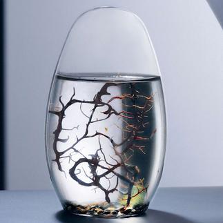 Ecosphere® Das vollkommene Ökosystem im Wasserglas, entwickelt von der NASA.