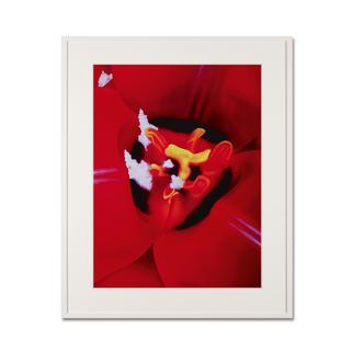 Marc Quinn – Close Up 1 Fotorealistische Edition des britischen Weltstars Marc Quinn. 100 Exemplare. Maße: 75 x 100 cm