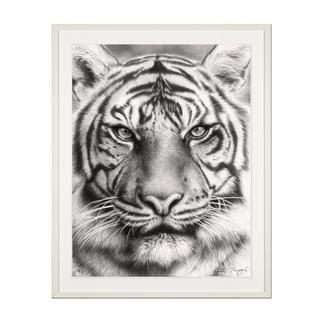 """Koshi Takagi: """"Eyes of the tiger"""" Fotorealistische Bleistiftzeichnung. Mit über 1 Million handgemalten Strichen. Koshi Takagis erste Edition seiner Raubkatzen-Serie. 90 Exemplare."""