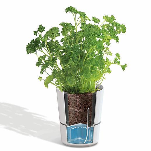 Einmal gießen – eine Woche lang ernten. Ihre Kräuter versorgen sich selbst.