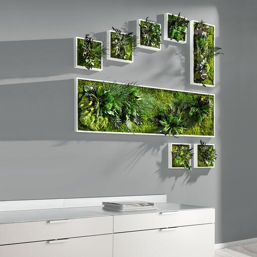 Echtpflanzenbilder