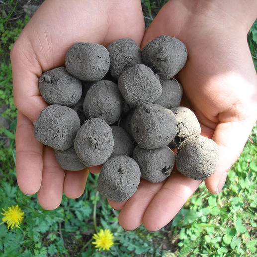 Saatbomben-Set Verwandeln Sie öde Freiflächen in 4 bis 8 Wochen in blühende Blumenfelder.