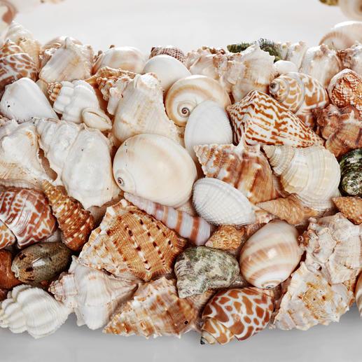Die Muscheln und Meeresschnecken entstammen u.a. dem Indischen Ozean, dem Roten Meer und der Karibik.