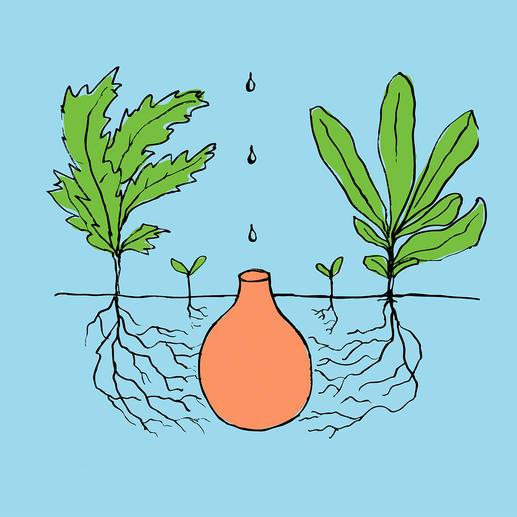 Dank porösem Naturmaterial können sich die Pflanzen selbst bedienen.
