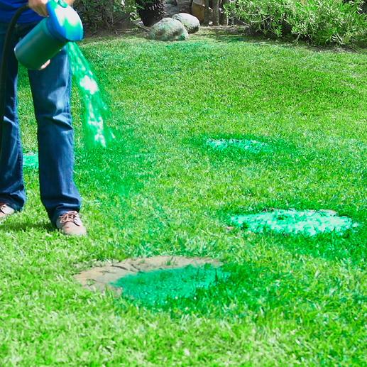 Durch den grünen Trägerstoff bleiben die Samen am Boden haften und Sie können sehen, wo Sie bereits gesprüht haben.