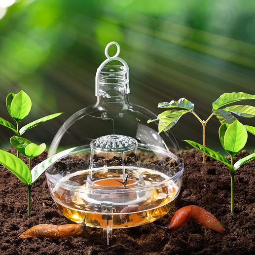 Im Gemüsebeet ein wirksamer Schutz gegen Schnecken.