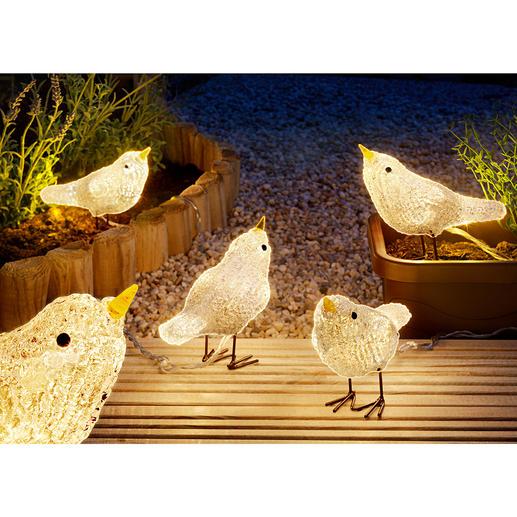LED-Vögel, 5er-Set - Fröhlicher Lichtblick: die bezaubernde LED-Vogelschar. Ganzjährig eine bezaubernde Dekoration, in- und outdoor.