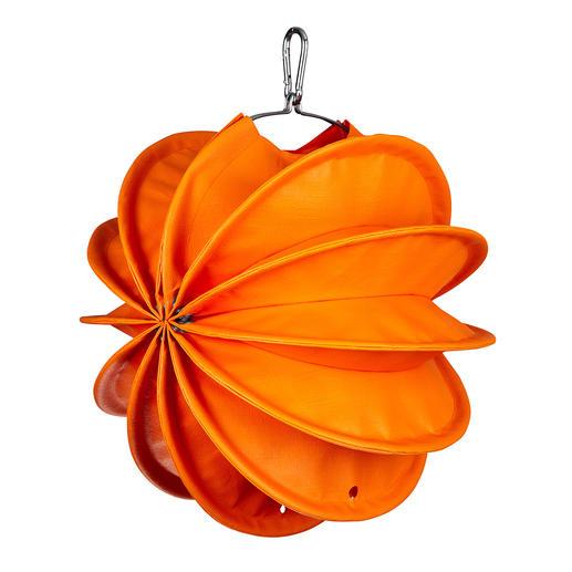Klein, Orange