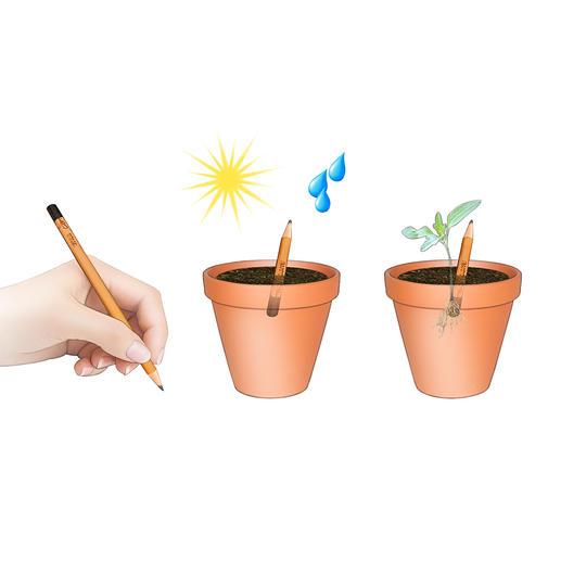 Schreiben – einpflanzen – etwas Sonnenlicht und Wasser – und nach ein paar Tagen sprießen die ersten Keimlinge.