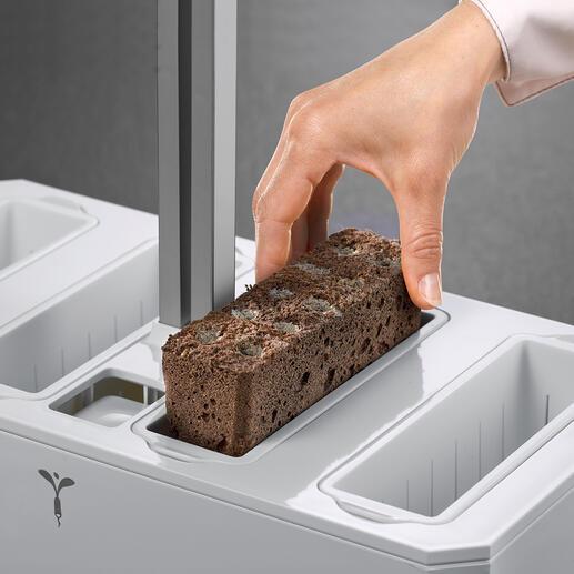 Legen Sie einfach die blockförmigen Substrate (Lingots®) in die Pflanzmulden ein.