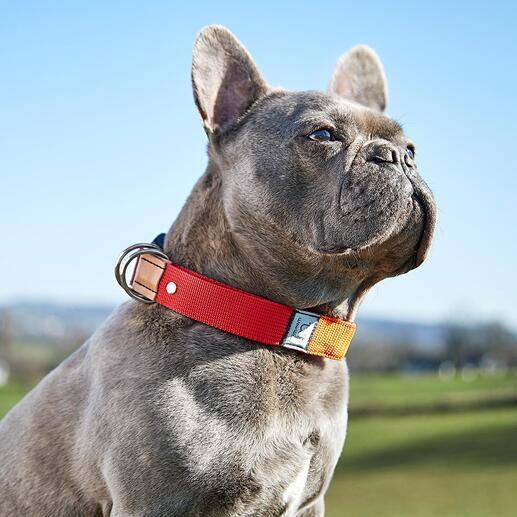 Die Leine ist direkt in das Halsband integriert – so haben Sie beide Hände frei wenn Ihr Hund frei läuft.