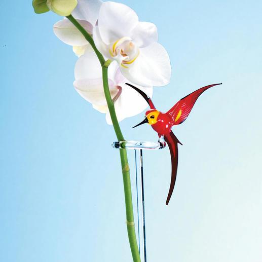 orchideenstab kolibri oder schmetterling kaufen. Black Bedroom Furniture Sets. Home Design Ideas