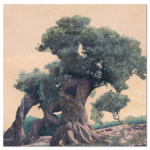"""Ingo Wegerl: """"Olivenbaum"""" - Ingo Wegerls zweite Leinwandedition – zu 100 % handüberarbeitet. Niedrig limitiert – in zwei Größen erhältlich."""