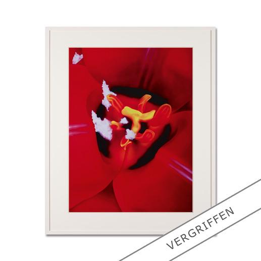 Marc Quinn – Close Up 1 - Fotorealistische Edition des britischen Weltstars Marc Quinn. 100 Exemplare.