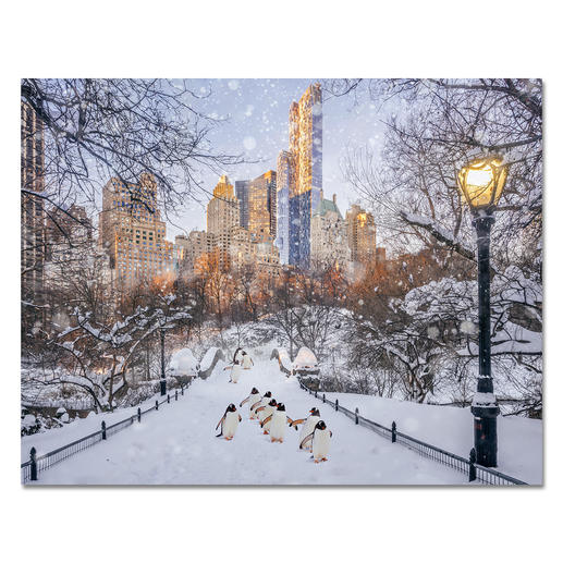 "Robert Jahns – New York City Penguins II - Robert Jahns: Einer der populärsten Instagram-Stars. 50.000 Likes über Nacht für das Motiv seiner ausverkauften Edition ""New York City Penguins"". Neueste Edition ""New York City Penguins II"" exklusiv bei Pro-Idee."