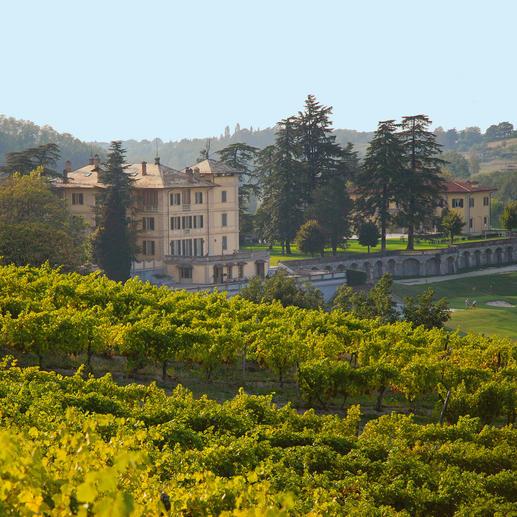 """Armason 2015, La Bollina, Piemont, Italien """"Einer der besten Weißweine Italiens. 96 Punkte."""" (Luca Maroni über den Jahrgang 2012, lucamaroni.com, 08.07.2013)."""