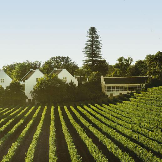 """Christine 2011, Buitenverwachting, Constantia, Südafrika Einmal im Jahr gibt es einen neuen """"Christine"""". Aber nur 2 Stunden lang."""
