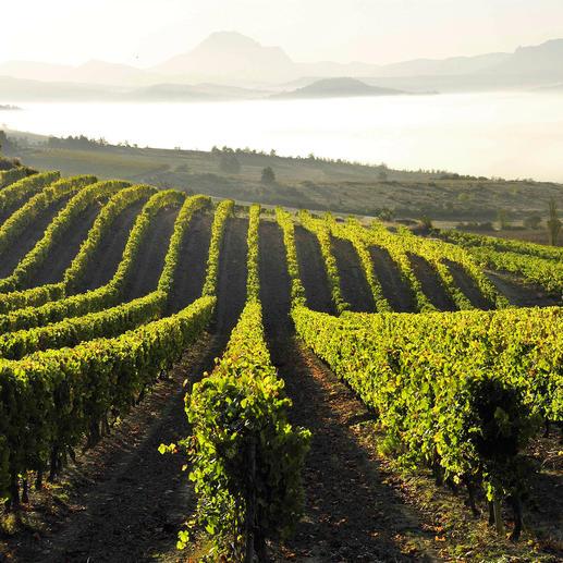 Chardonnay Océanique Toques et Clochers 2013, Sieur d'Arques, Limoux, Languedoc, Frankreich 91 Punkte von Robert Parker. (Wine Advocate 224, 04/2016)