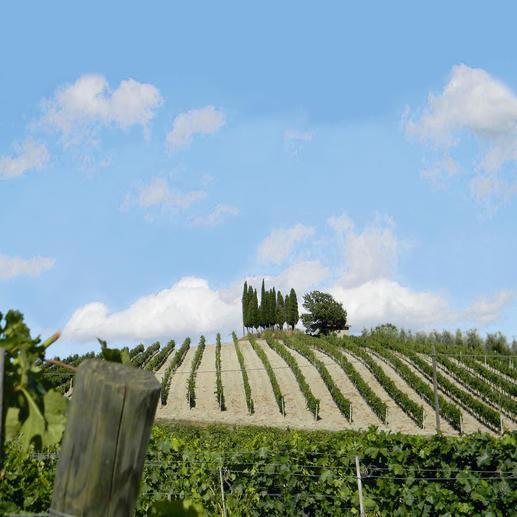 Alchymia Primitivo 2014, Barbanera, Apulien, Italien 98 Punkte von Luca Maroni, Annuario dei Migliori Vini Italiani 2017