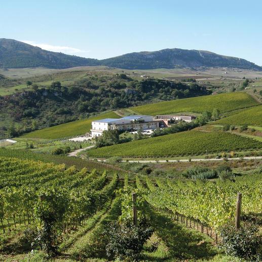 Weingut Baglio di Pianetto