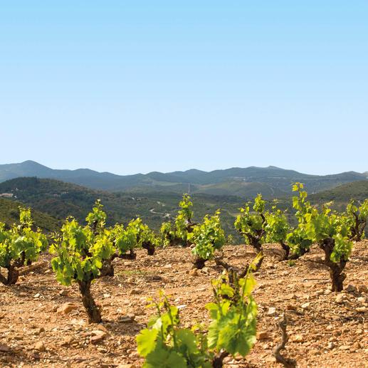 """Bastide Miraflors 2015, Domaine Lafage, Roussillon, Frankreich """"… fast zu schön um wahr zu sein. 94 Punkte."""" (Robert Parker, Wine Advocate 230, 04/2017)"""