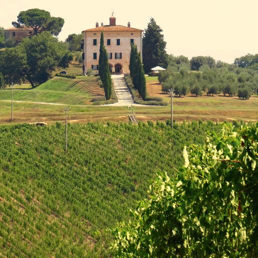 Weingut Fattoria del Cerro