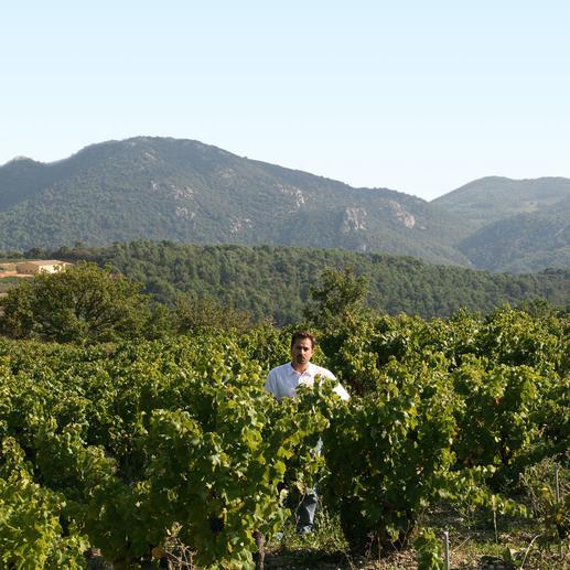 "Arcane Le Diable 2015, Xavier Vins, Côtes du Rhône, Frankreich ""Sensationell … eine üppige Schönheit."" (Robert Parker, Wine Advocate 227, 10/2016)"