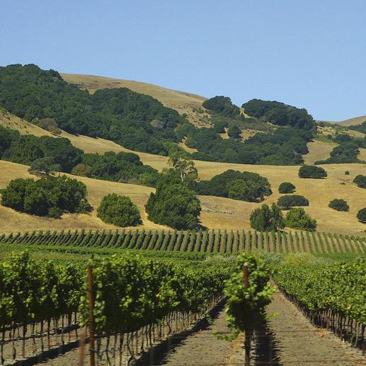 Zinfandel Sonoma County 2016, Seghesio, Kalifornien, USA Zum vierten Mal unter den Top-100-Weinen der Welt. (Wine Spectator 2008, über den Jahrgang 2007, www.winespectator.com)