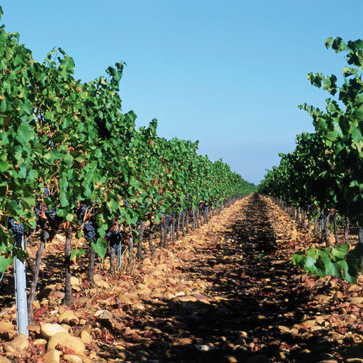 Premier Terroir 2014, Château Beauchêne, Côtes du Rhône AOC, Frankreich Ein Glück, dass dieser Wein nicht Châteauneuf du Pape heißen darf.